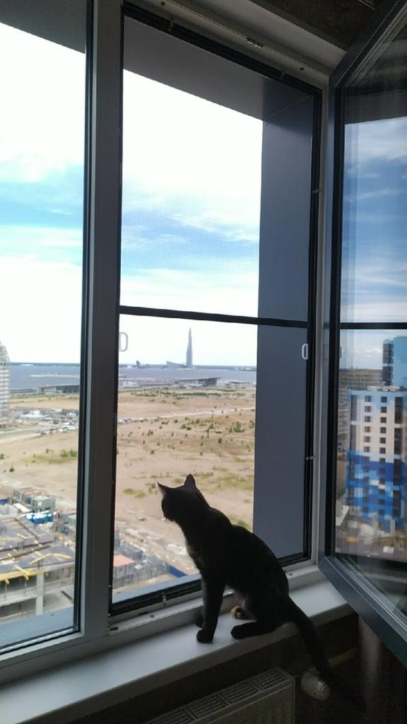 Кошка смотрит через москитную сетку